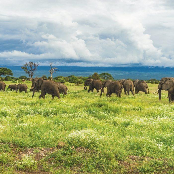 Słonie w Tanzanii