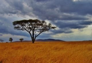 Tanzania Sawanna