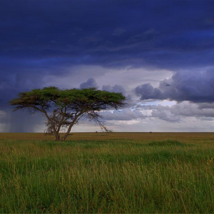Wycieczka do Tanzanii
